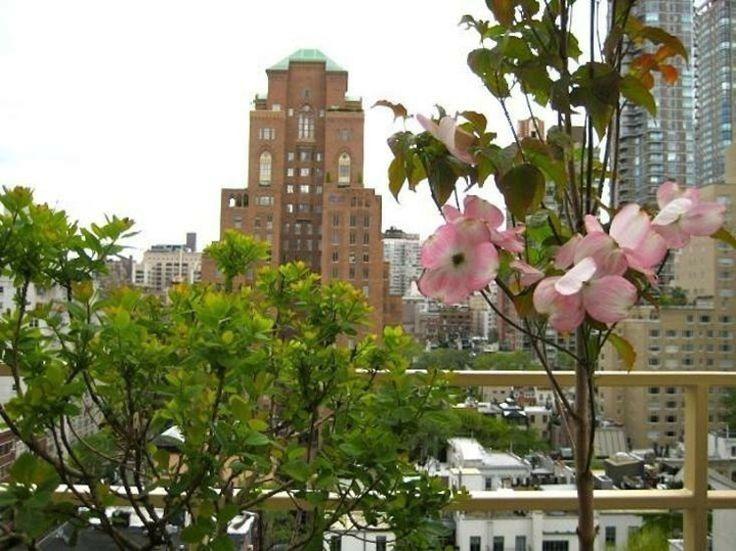 hartriegel-garten-dachterrasse-baum-kompakt-groesse-new-york-balkon