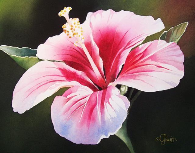 Картинки по запросу тропические цветы