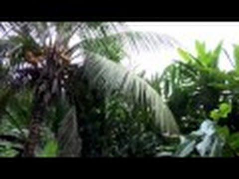 BEAUTIFUL     SCARLET    MACAWS      COSTA     RICA