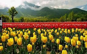 Image result for beautiful kashmir images