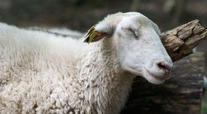 "7 Traits of False Prophets in Sheep's Clothing - A false teacher can be anyone in a position of spiritual authority or claiming to be. They bring destructive teaching and lies into the church, often, by telling people what they want to hear (Jer. 23). They provide layers of truth mixed with errors, but even a brokenclock is right twice a day. (Jesus said, ""Beware of false prophets, who come in sheep's clothing, but inwardly they are ravenous wolves. You will know them by their fruits.""…"