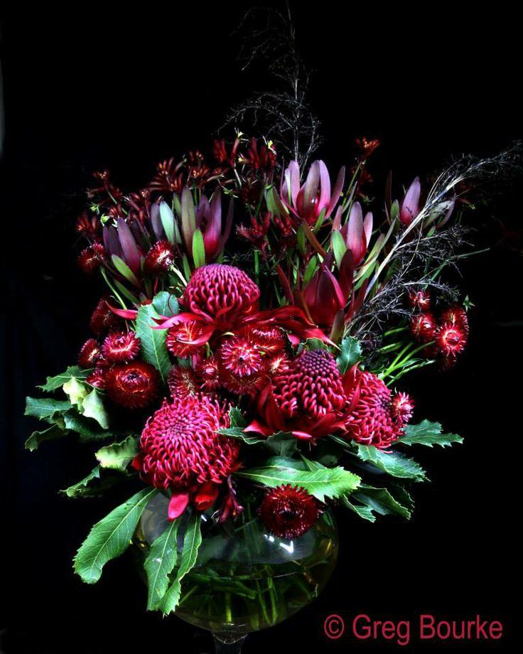 Waratah, Leucadendron, Kangaroo Paw and Strawflowers by Greg Bourke