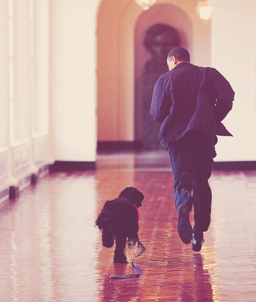President Obama and his dog Bo Obama running through the east wing of the White House