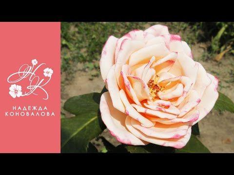 Садовая роза из фоамирана по шаблонам с настоящего цветка с тонировкой лепестков акриловыми красками - YouTube