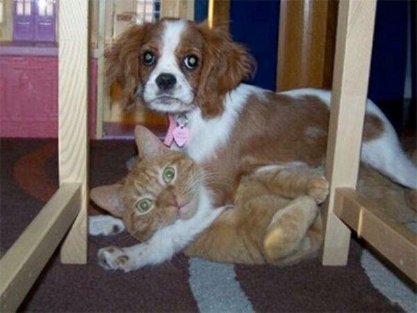 Husdjur tagna på bar gärning...