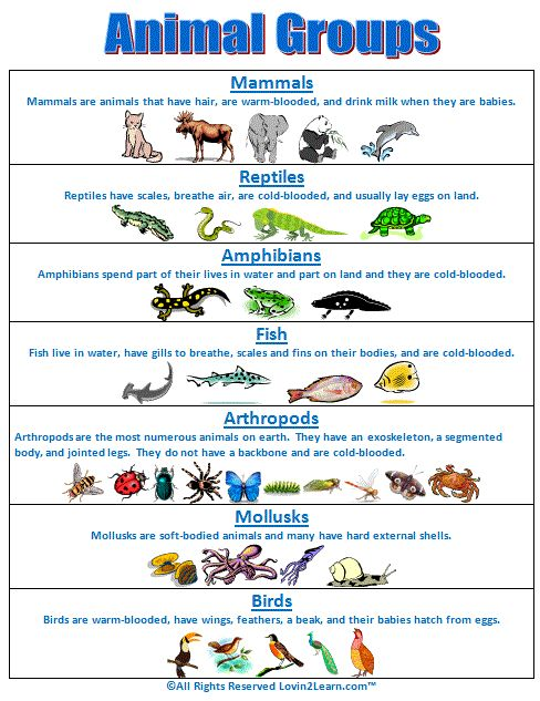 Super Subjects - Super Science - Life Science - Animal Groups - Animal Groups Chart