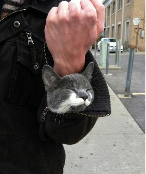 im in ur slv, stealin ur arm spaceKitty Cat, Friends, Funny, Weapons, Sleeve, Arm Warmers, Crazy Cat, Kittens, Animal