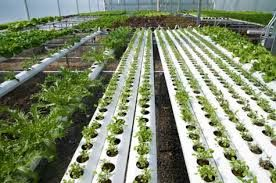 To make your plants and vegetables healthy and disease free, max grow shop provides exclusive hydroponics. Hydroponic gardening is very suitable if you want to manage every phase of your plants growth. Check out the other details online and book your order now.