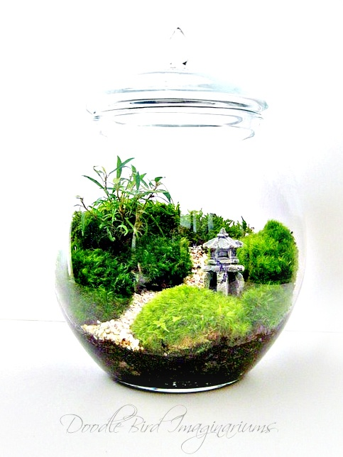 Superior Japanese Garden Terrarium