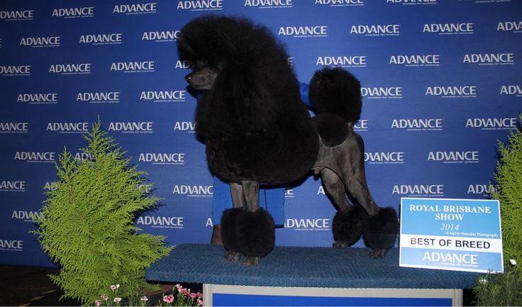 Canine People's Choice Award winner!