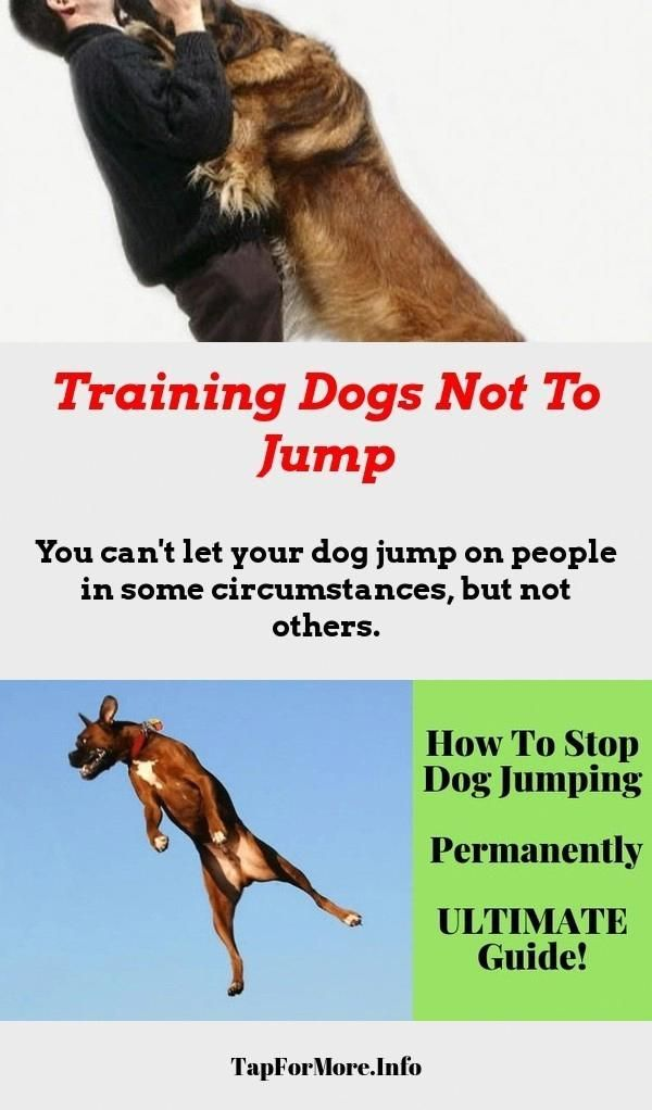 Stop Dog Jumping And Alpha Dog Training Check The Pic For Many