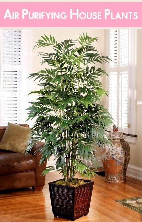 Hava Temizleme Ev #Gardening Bitkiler | My Favorite Things