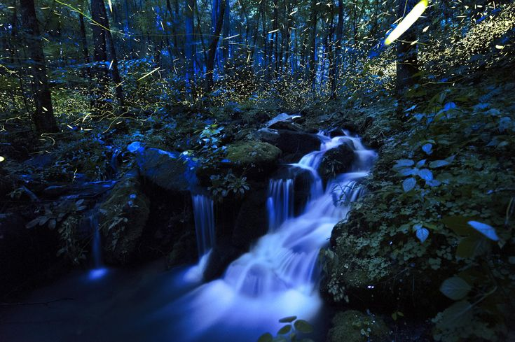 Great Smoky Mountains, U. S. #firefly #螢火蟲