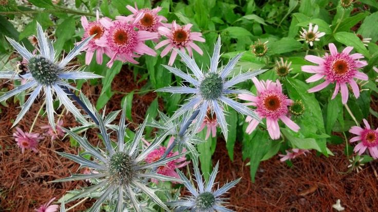 Landscape services / commercial landscaping perennial gardens