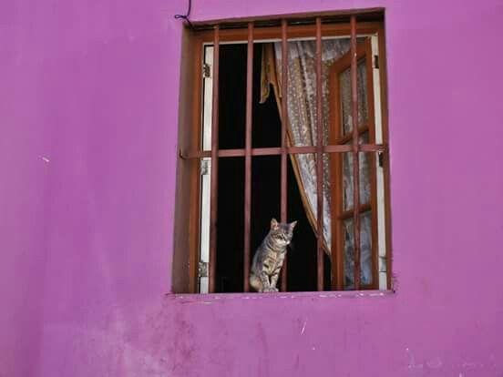 gato porteño. .. Fotografia: Sandra Butkovich