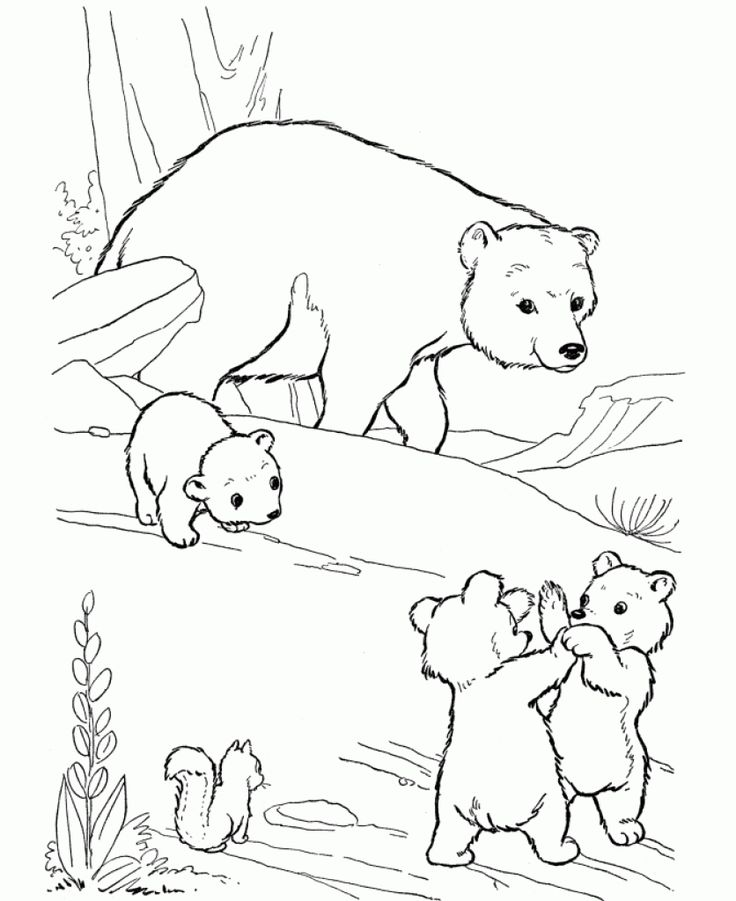 56 best Party on the Farm! images on Pinterest Coloring books - fresh realistic bear coloring pages