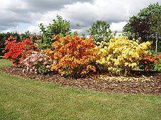 Buske med efterårs farver