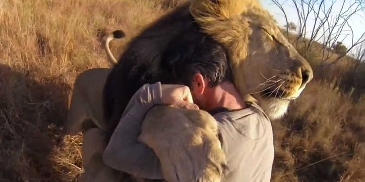Video Of A Man Hugging A Wild Lion Will Bring You To Tears