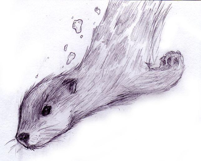Otter Drawing Google Search Otter Tattoo Animal
