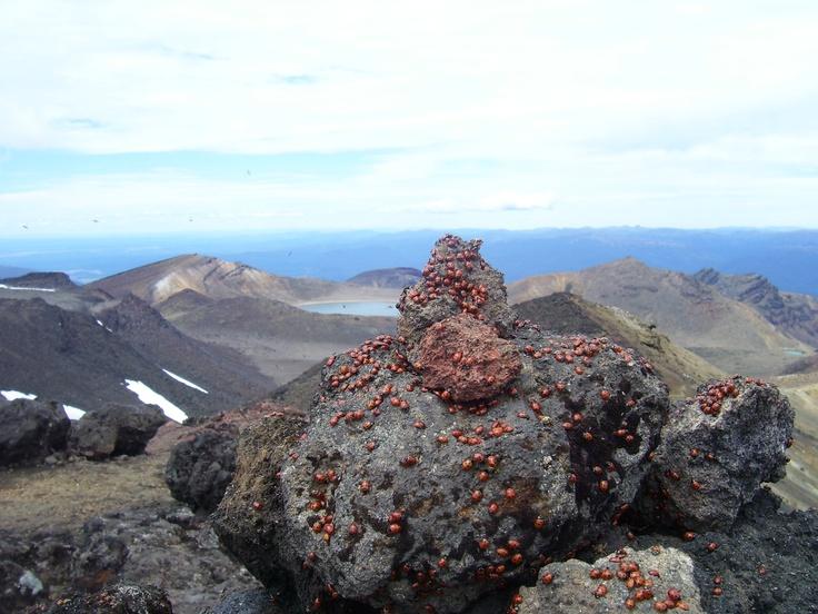 Nieuw Zeeland - vulkaan