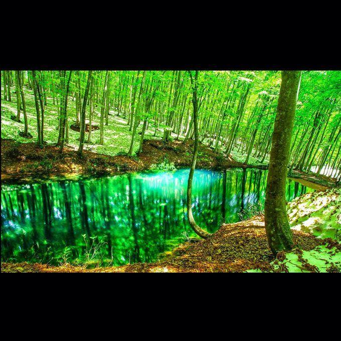 言葉が出ないほどの絶景!新潟県・美人林が美しすぎるほどの絶景だった | RETRIP