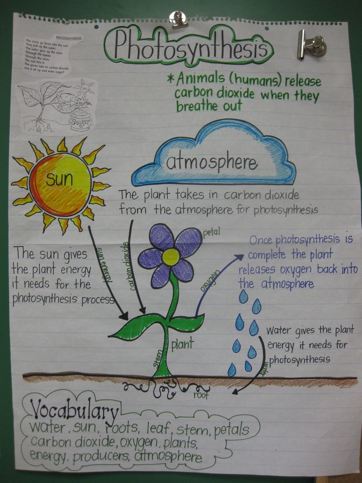 STAAR Review anchor chart for 5th Grade Science...something I use to help students prepare for STAAR