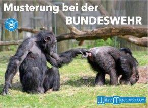 Musterung bei der Bundeswehr - Lustige Affenbilder