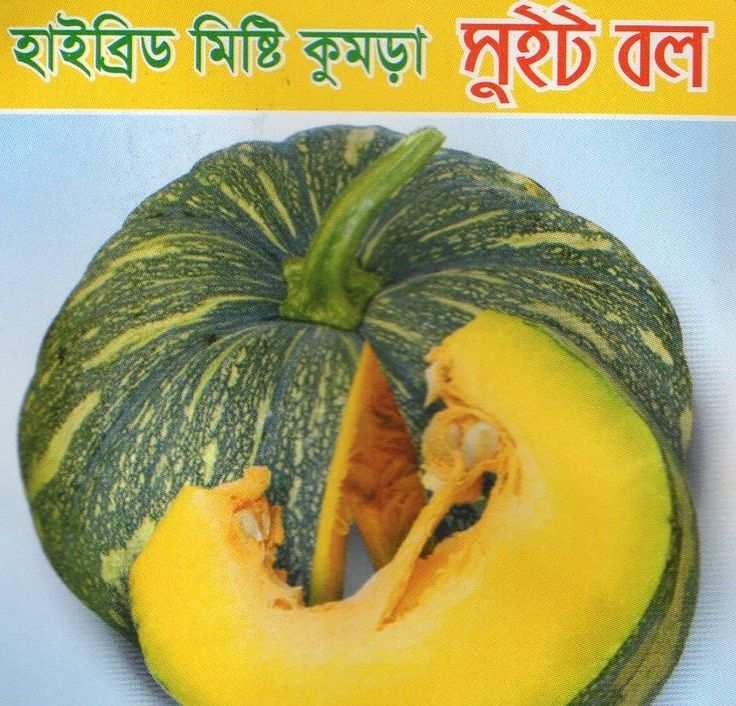 Bangladeshi Misti Kumra Kodu Seeds / Asian Sweet Pumpkin Seeds / Mita Khodu Beej in Garden & Patio, Plants, Seeds & Bulbs, Seeds & Bulbs | eBay