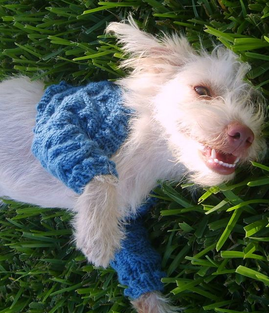 178 Best Dog Sweaters To Knit Amp Crochet Patterns Images