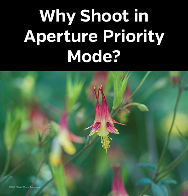 Guide to photographing in aperture priority mode