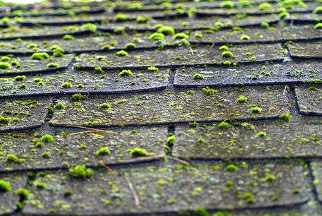 Removing Moss on Roofs