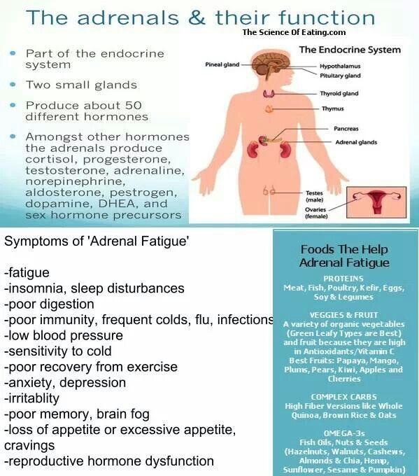 The adrenals & their function