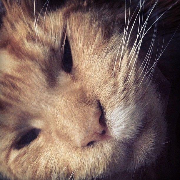 Kitty Kat :)