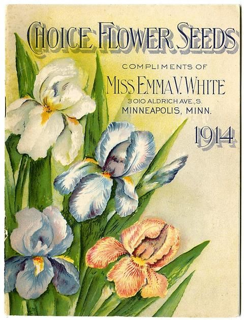 "The front cover of Emma V. White's 1914 catalog is adorned with a blooming irises. Emma V. White called herself the ""North Star Seedswoman"" and had her first mailing in 1896. She produced catalogs with colorful, hand painted covers aimed at woman customers."