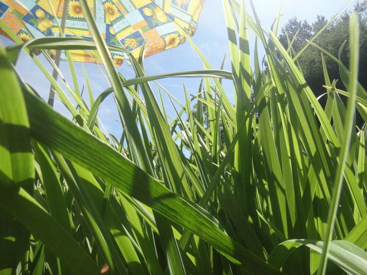 garden  green  sunny  sun