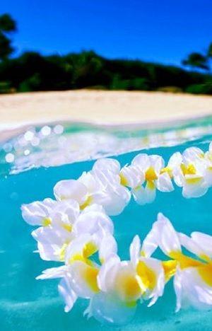Aloha, lei, sea shore, relax, water, vacations, sand, destinations, tropical, tropics, warm, ocean, sea, seas, crystal clear water, paradise, white sand, salt water, salt life, #beaches #islands #vacations
