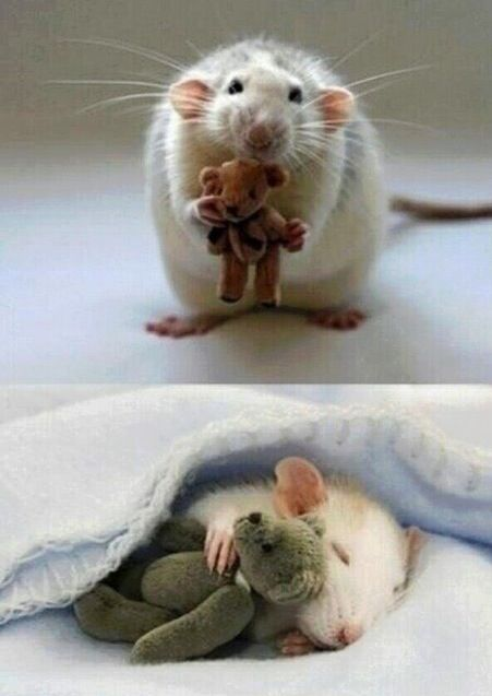 Cutest thing ever. A lady makes teddy bears for mice. Now she needs to make clothes for them and we can call her Cinderella!