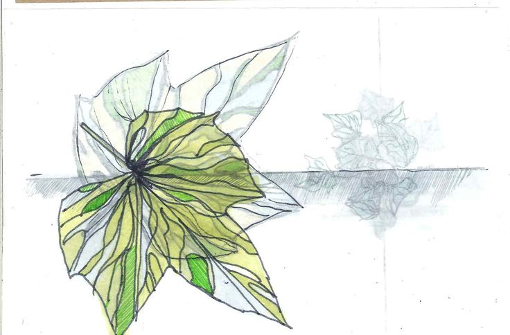 Precedent four drawing, looking at the fragility of the ivy, and using the overlapping images- drawn on separate sheets of tracing paper and overlayed, to create a sense of movement, reflecting how the ivy grows, and shifts across the space.