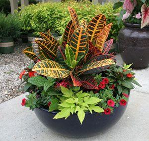 herb container garden combinations | Tree Top Nursery - Garden Tips - Container Gardens