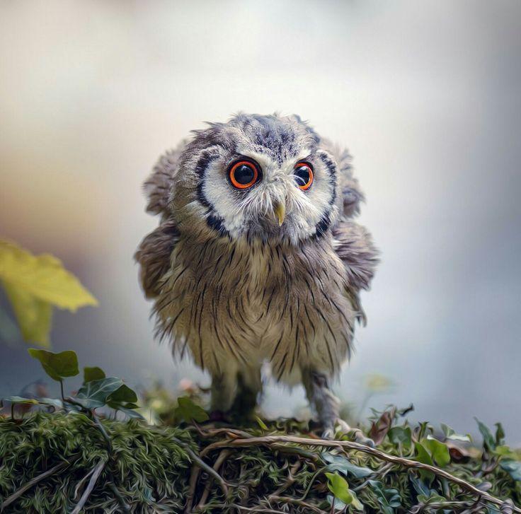 Awwwww, soooo cute :-)                                                                                                                                                                                 More