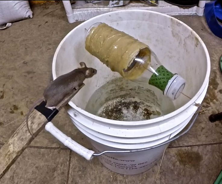 Awesome Quick Rat Trap Using Pvc Best Mouse Trap