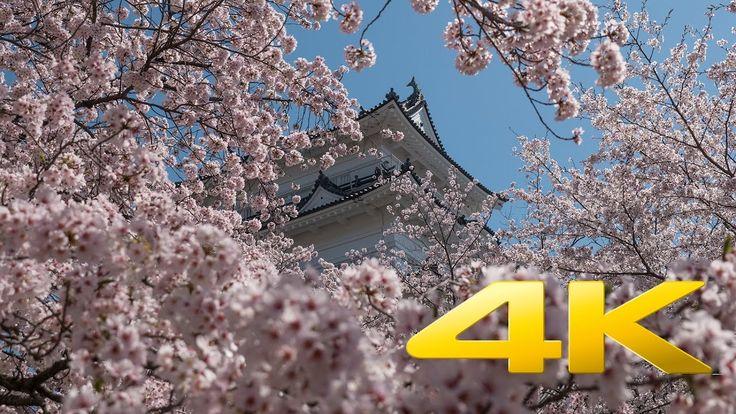 Odawara Castle and Cherry Blossoms - Kanagawa - 小田原城 - 4K Ultra HD