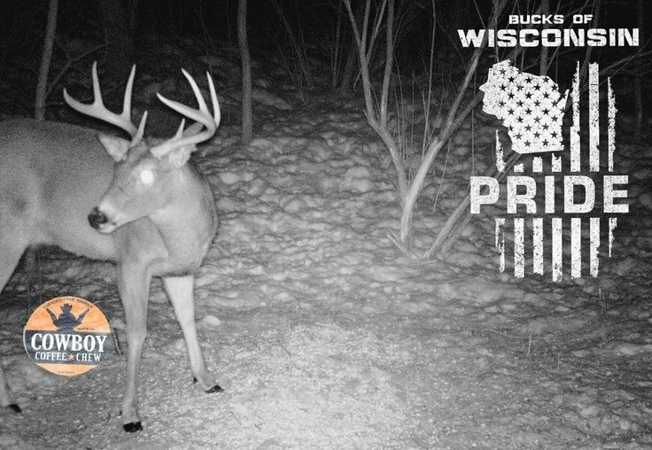 """DEER Hunters LAST WEEK to ENTER Our FREE GIVE AWAY CONTEST to WIN 3 Cans of Cowboy Coffee Chew Just Send Your Best Trail Camera Photos to @BucksofWI """"Bucks of Wisconsin"""" & if we Pick Your Picture You'll WIN 3 FREE Cans of Cowboy Coffee Chew. Ends Saturday at Noon & Starting Sunday we'll be having a Weekly BIG BUCK Contest so make sure to FOLLOW us for Details."""