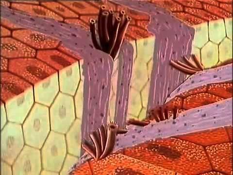 Es war einmal    Das Leben 06 Blutplättchen Ganze Folge - YouTube