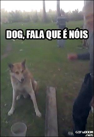 Dog, fala que é nóis!