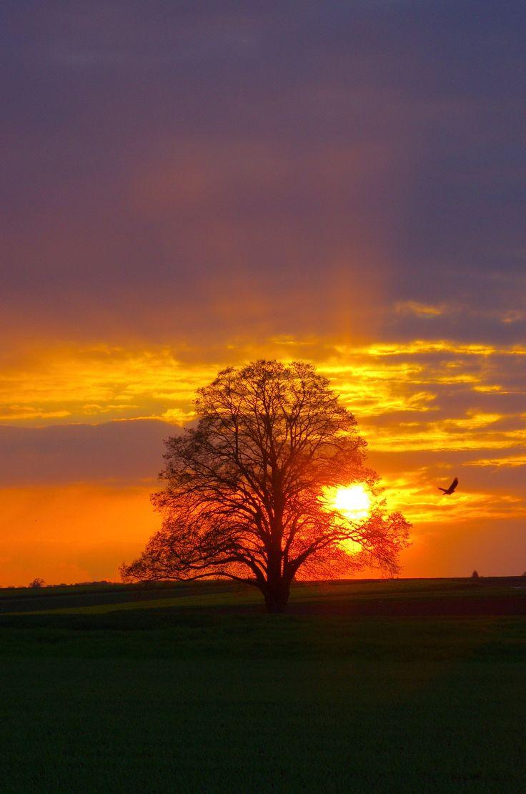 Atardecer | Sunset
