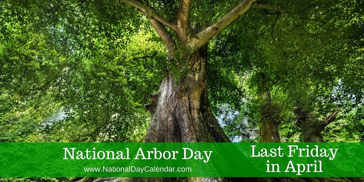 LAST FRIDAY IN APRIL NATIONAL ARBOR DAY National Arbor Day is observed each year on the last Friday in April. Arbor Day is a holiday in which individuals and groups are encouraged to plant and ca…