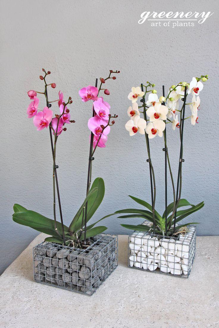 Gabion pot suitable for orchids Gabion creations by greenery #gabion #gabioncreations #pots #greenery #airplants #succulents #cactus #plants #chania #greece