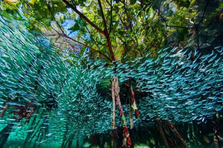 15лучших фотографий этого года отNational Geographic