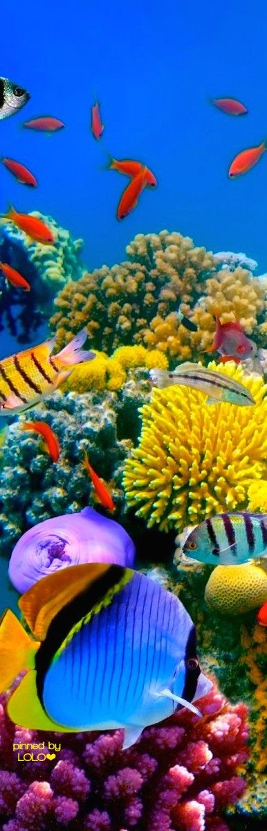 Another dream destination....Great Barrier Reef | LOLO❤